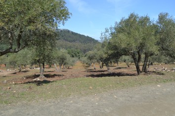 Olive groves on the walk to Macho Montes Mirador