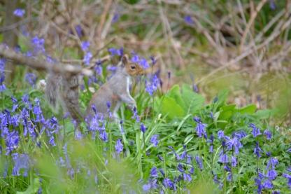 Squirrel at Eagles Garth 21.4