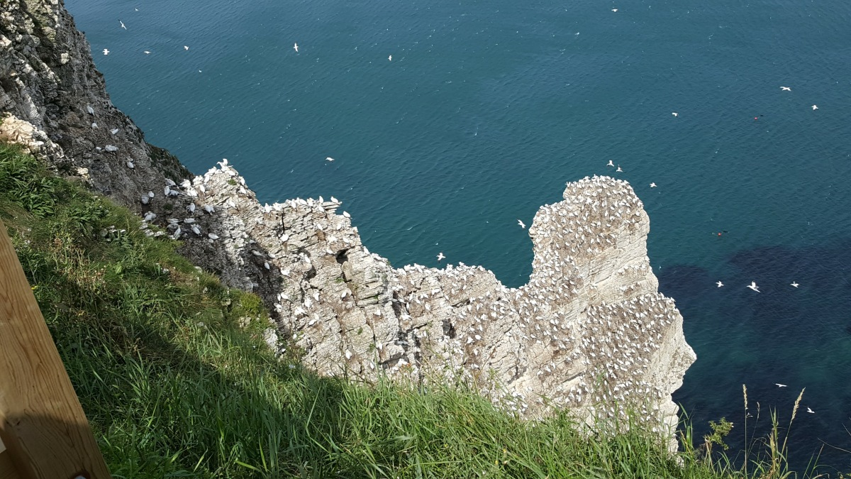 Clifftop Walks at Flamborough Head – we spotted a few puffins too :)