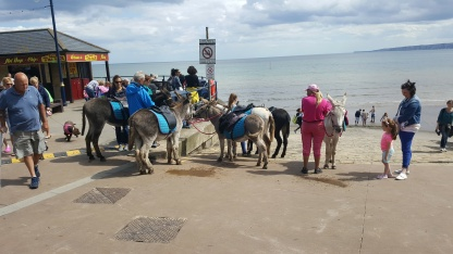 Donkeys at Filey