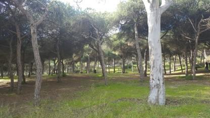 Pine forest, El Puerto de Santa Maria